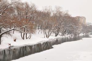 iarna11.jpg