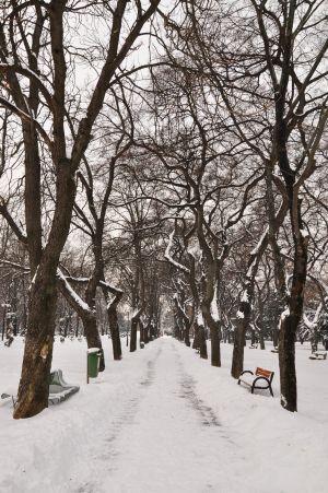 iarna15.jpg