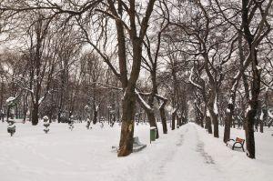 iarna16.jpg