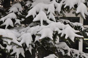 iarna21.jpg
